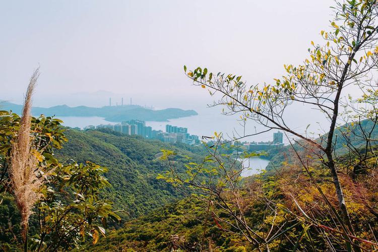 Những người giàu có lần đầu tiên chuyển đến khu vực này đơn giản vì nó mát mẻ hơn nhiều so với những khu phố đông đúc nơi phố thị trung tâm ồn ào. Ở một nơi chật hẹp như Hong Kong, khu phố như The Peak mang lại cảm giác như trên thiên đường. Đó là nơi biệt lập bởi đường phố quanh co và thảm thực vật nhiệt đới dày đặc.