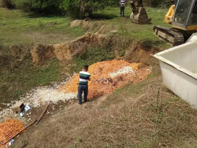 Cơ quan chức năng tiêu hủy 2 tấn chân gà không hợp vệ sinh an toàn thực phẩm vừa mới phát hiện được.