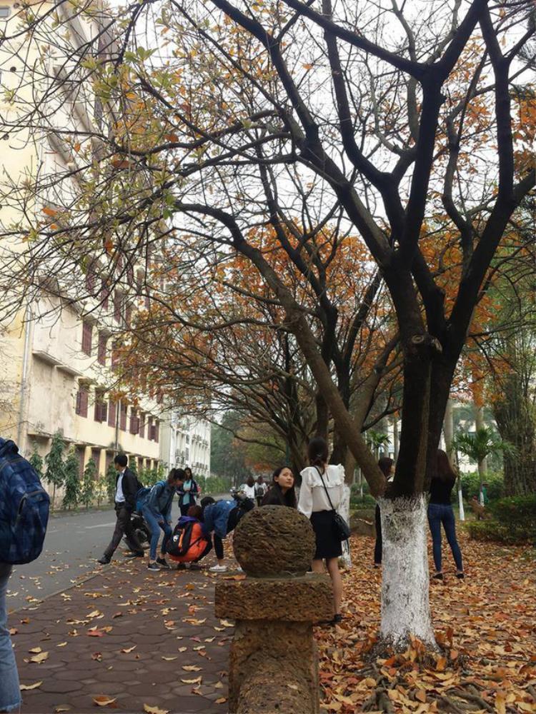 Có mỗi một cây lộc vừng thay lá thôi mà sinh viên Ngoại thương, Sư phạm cũng đủ chất liệu biến tấu thành 1.000 kiểu ảnh sống ảo
