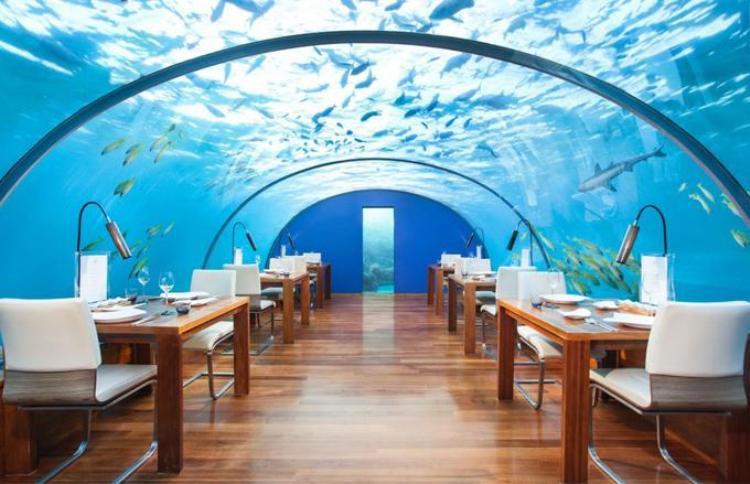 Làm thế nào để cùng ăn tối với cá mập, cá đuối và rùa? Bạn có thể đến nhà hàng Ithaa ở Maldives. Đây là là điểm hút khách với những người yêu thích đại dương nhưng quá sợ hãi trong việc lặn dưới biển. Ảnh: 1oceanyachts/Instagram