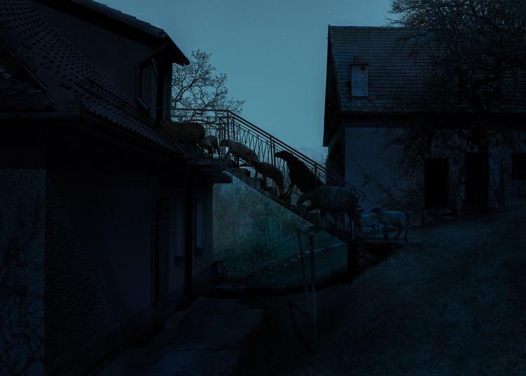 """Hanh mục ảnh Chuyển đổi gọi tên tác giả Adam Zadlo với """"Stairs"""" chụp con cừu ở Ba Lan.""""Không có nhiều loài động vật năng suất như cừu. Chúng cho len, sữa, thịt nhưng trí nhớ của chúng khá tệ"""", Adam nói về nhân vật chính trong bức ảnh của ông."""