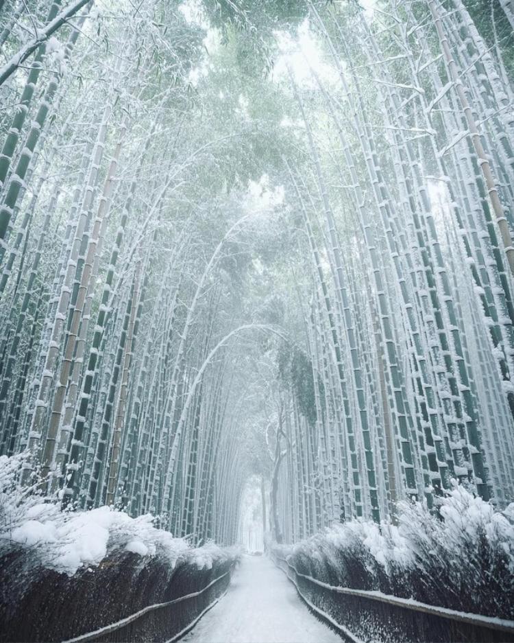 Có lẽ đoàn làm phim Frozen nên cân nhắc tới việc dùng rừng tre tuyết này làm bối cảnh dựng phim. Ảnh: Brightside