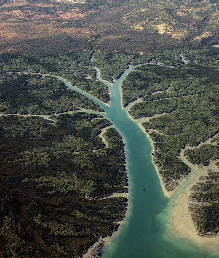 Ngay cả một con sông tại Úc cũng có thể phác họa hình cây cối. Ảnh: Pikabu