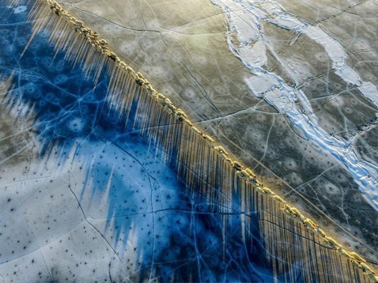 Khi đàn cừu cố gắng băng qua một hồ băng tại Tây Tạng. Ảnh: Pikabu