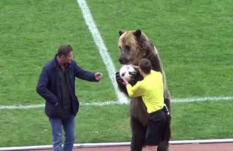 Chú gấu trao bóng cho trọng tài.