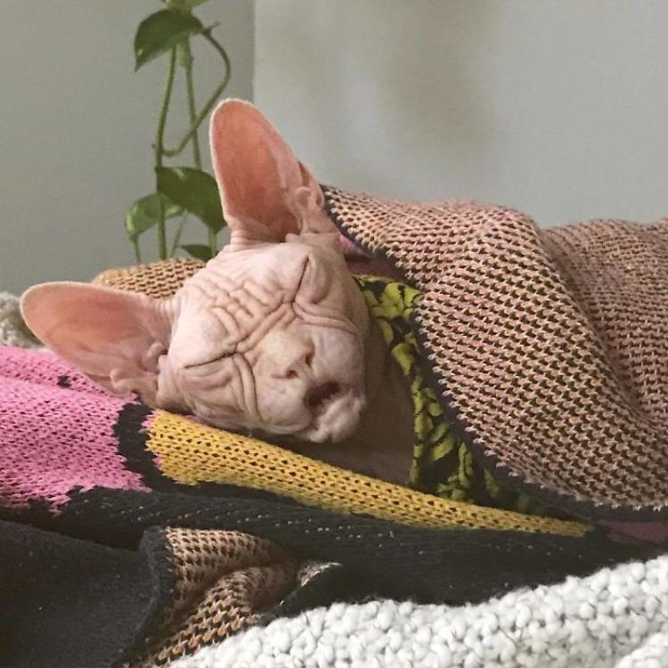 Khi ngủ, Loki cũng mang gương mặt cau có khiến người khác phải bật cười.