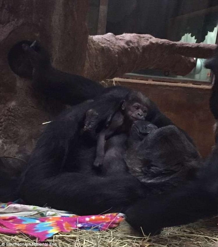 Hai mẹ con ôm nhau nghỉ ngơi sau giờ phút sinh nở vất vả.
