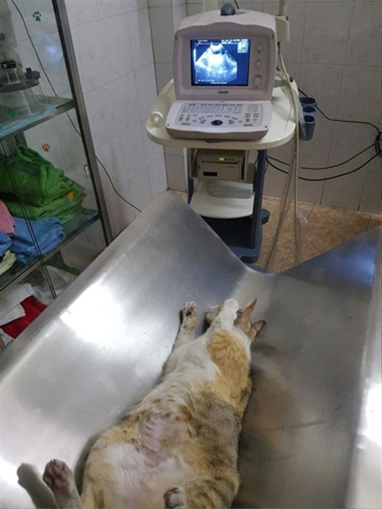 Hình ảnh chú mèo được bác sĩ chăm sóc.