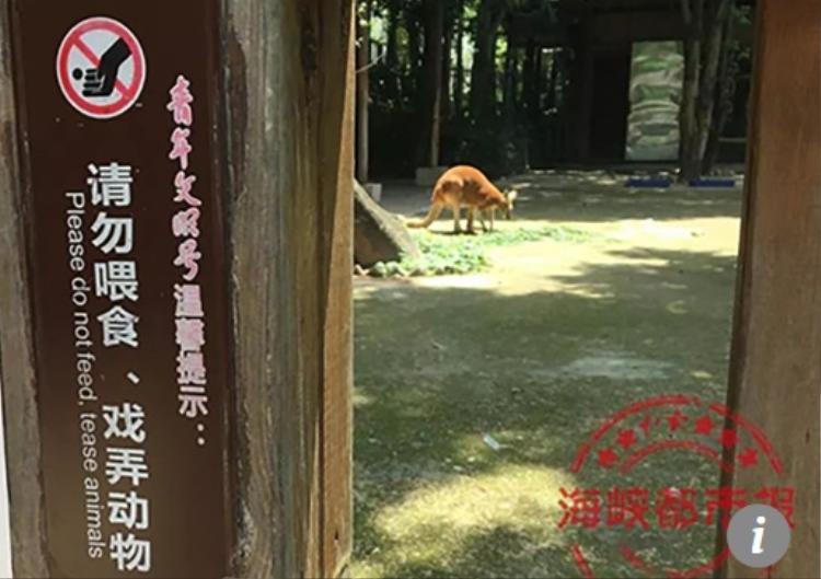 Dù vườn thú đặt biển cấm du khách cho động vật ăn bừa bãi và không được tấn công chúng, du khách vẫn vi phạm. Ảnh: Sina.cn