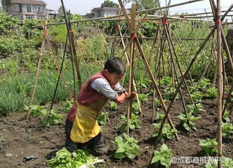 Bà vốn là một người khuyết tật, không may mắn khi bị cụt cả tay và chân. Nhưng không vì vậy mà bà từ bỏ cuộc sống. Ảnh:Chengdu Economic Daily