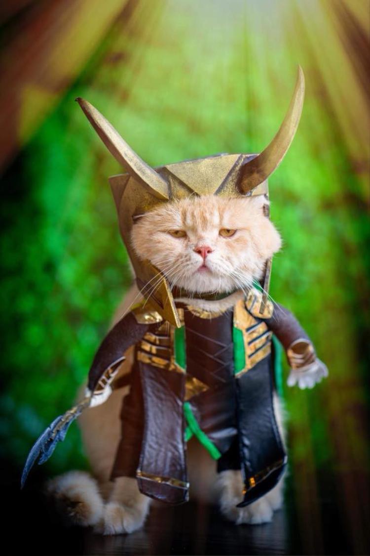 Chú mèo tên Chó ở Hải Phòng lại tiếp tục nổi tiếng thế giới với bộ ảnh cosplay Avengers cực ngầu