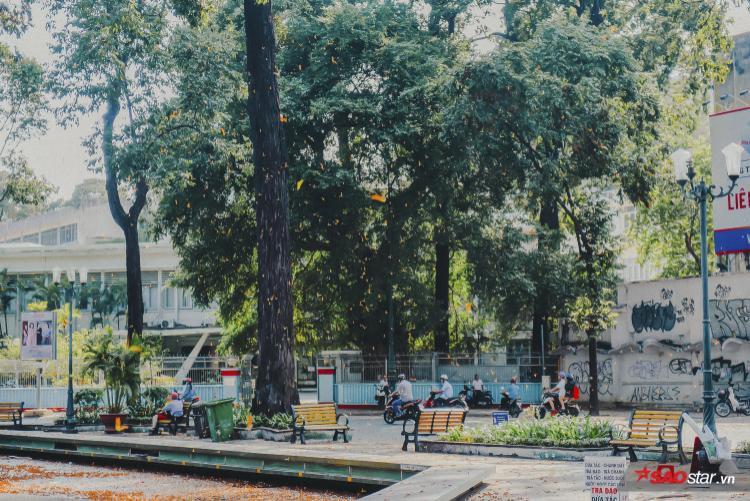 Lâu lắm rồi, người ta mới được dịp ngắm Sài Gòn điệu đà, chầm chậm và lãng mạn thế.