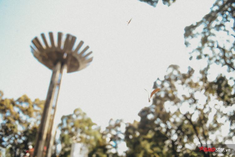 Hoa chò theo gió bay khắp nơi ở trung tâm thành phố tạo thành những cơn mưa hoa xoay tròn trong không trung.