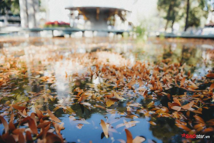 Nhưng với tôi, chò là hoa. Và nó là mùa hoa đáng nhớ nhất của người Sài Gòn.