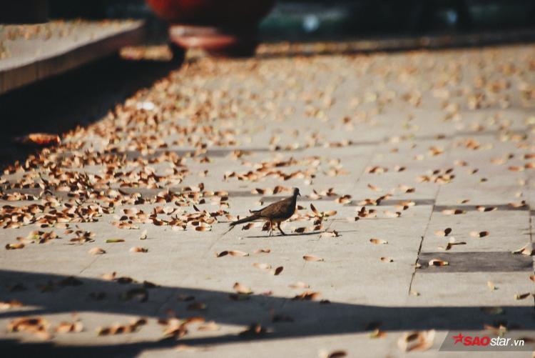 Chim chóc thành phố cũng thích hơn, vì lâu rồi mới lại thấy một mùa hoa lãng mạn như thế.