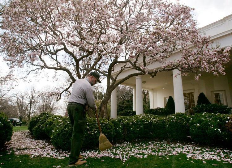 Công nhân Dịch vụ Công viên Quốc gia làm việc quanh năm kể từ năm 1933. Trong ảnh là một công nhân đang quét cánh hoa rơi trong Vườn Hồng.