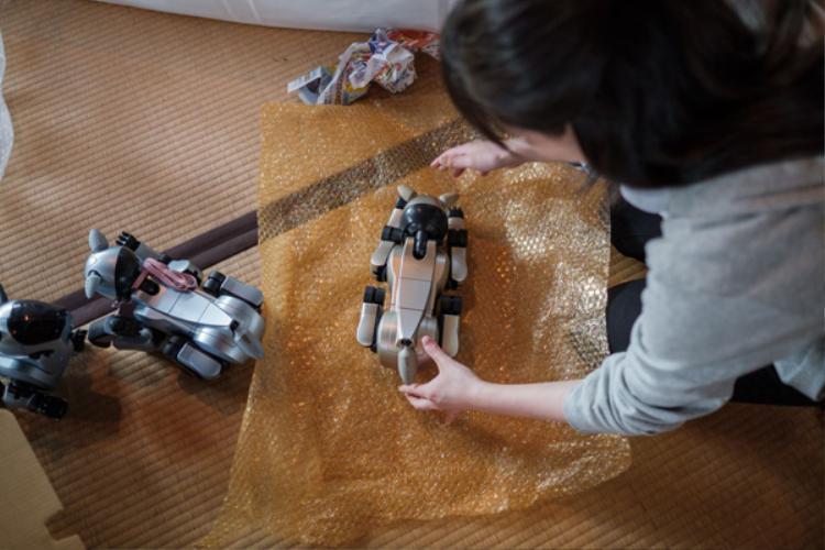 Lễ tang đặc biệt của 114 chú chó robot tại Nhật Bản