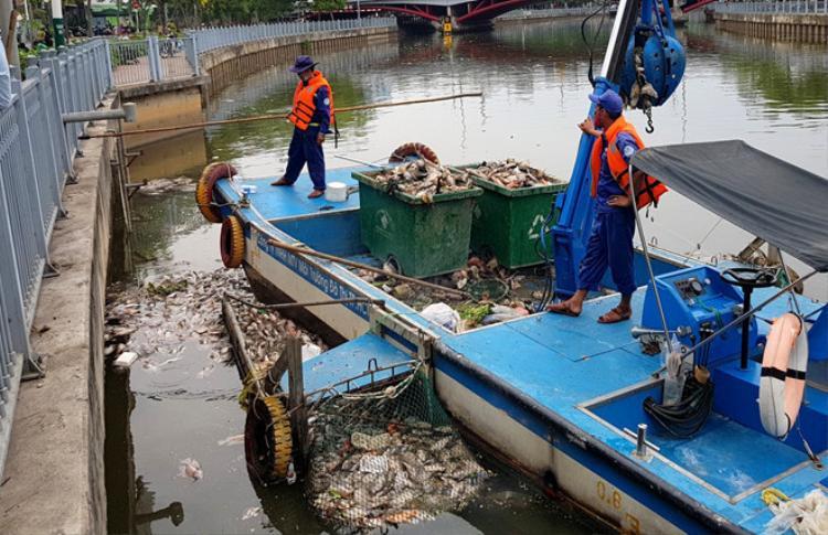 Nhân viên môi trường vớt cá chết. Ảnh: Zing