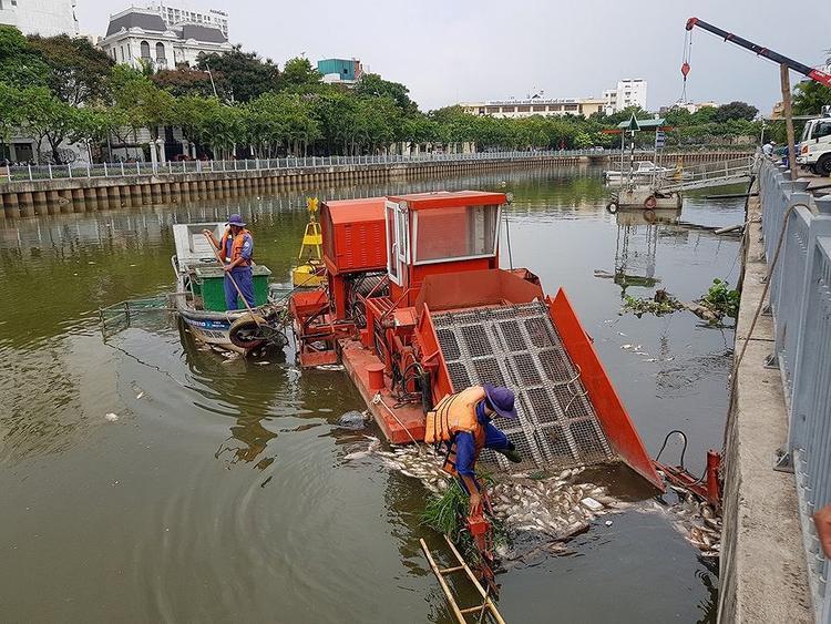 Các nhân viên tích cực thu dọn cá chết trên kênh. Ảnh: Báo SGGP