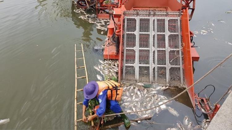 Từ trưa đã xuất hiện tình trạng cá chết nổi trên kênh. Ảnh: Báo SGGP