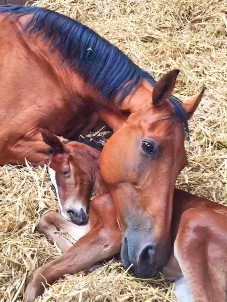 Bức ảnh cảm động về một con ngựa mẹ mất con và một con ngựa con mất mẹ. Một vài ngày sau khi con ngựa mẹ phải rời xa đứa con nhỏ, chủ trang trại đưa một con ngựa con đã mất mẹ tới sống cùng nó. Thật bất ngờ khi cả hai con ngựa ngay lập tức cuốn lấy nhau như 2 mẹ con. Có lẽ cả 2 đã phần nào bù đắp được sự mất mát cho nhau. Ảnh: CatsAndCoffeeAndCats/Imgur