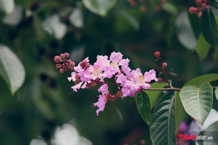 Hoa đẹp đến ngây ngất khi ướp mình trong những hạt sương buổi sớm.