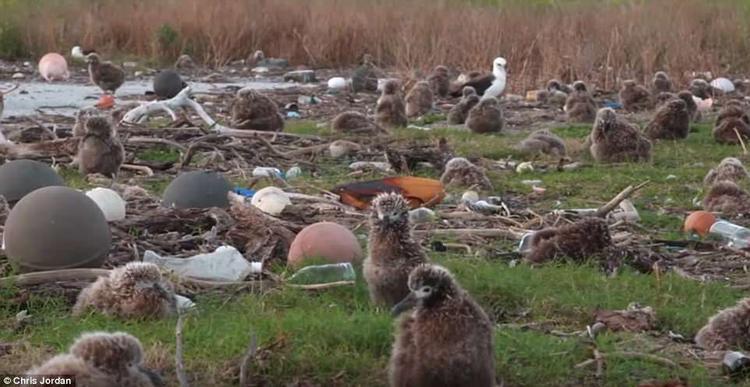 Những con chim phải sống trong một môi trường ô nhiễm do con người gây ra.
