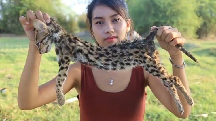 Mèo cá đang đứng trước nguy cơ tuyệt chủng bịAh Lin Tuch làm thịt.