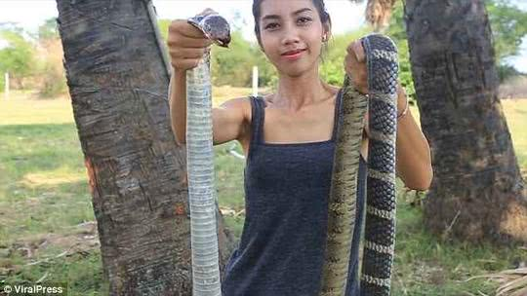 Và thậm chí là rắn hổ mang.
