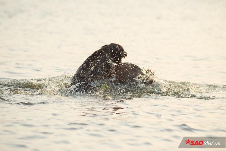 Những chú cún vẫy vùng dưới nước.