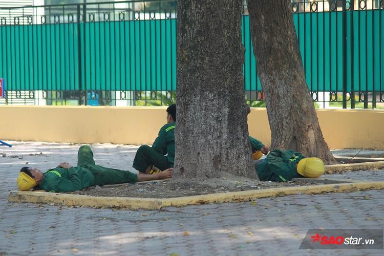 Nhóm công nhân ngủ vạ vật dưới bóng cây cổ thụ.