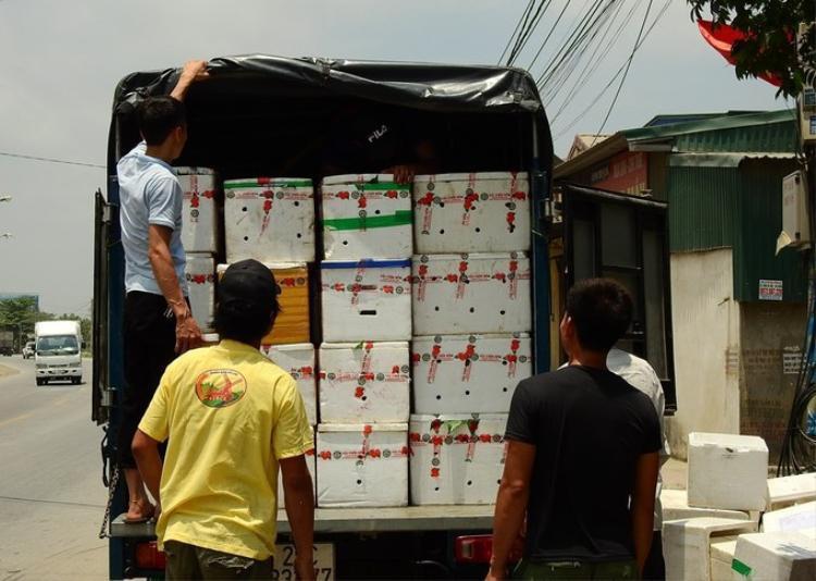 Vải Phương Nam được tiêu thụ phần lớn trong nội địa. Khi vải chín rộ một số thương lái Trung Quốc đến thu mua và vận chuyển qua biên giới bằng container.