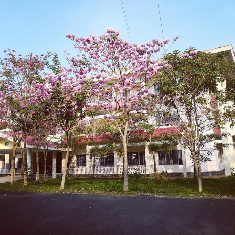 Giữa cái nắng chói chang của mùa hè, sắc kèn hồng phơn phớt khiến không khí trở nên dịu dàng hơn.
