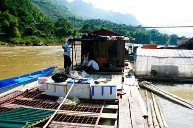 Khu thuyền bè nuôi cá chiên của ông Nguyên, ông Hà trên sông Gâm đoạn chảy qua Bắc Mê.