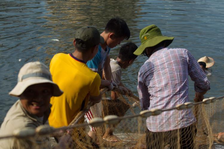 Một nhóm công nhân dùng lưới quây cá chết dưới hồ để đưa lên bờ.