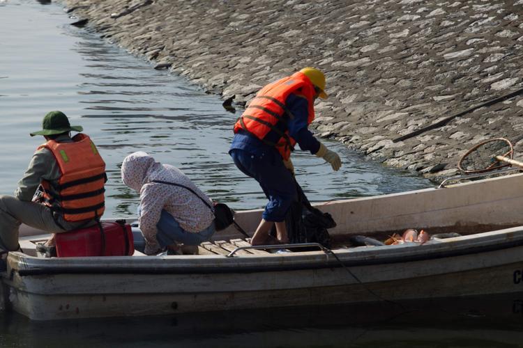 Công nhân môi trường thu gom cá, đồng thời lấy mẫu nước để mang về xét nghiệm.
