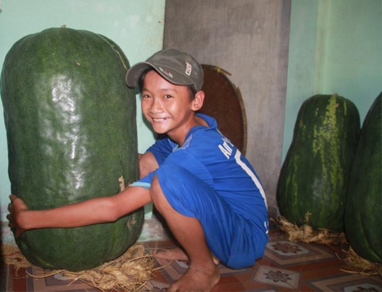 Quả bí nhà bà Đảm nặng hơn 50 kg vừa được thu hoạch chờ thương lái tới mua.
