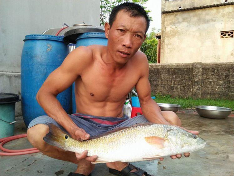 Con cá nghi là cá sủ vàng do ngư dân Lê Văn Sử bắt được