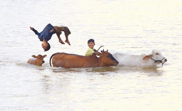 Trẻ em đi chăn trâu và vui đùa, bơi lội tại tỉnh Kon Tum.
