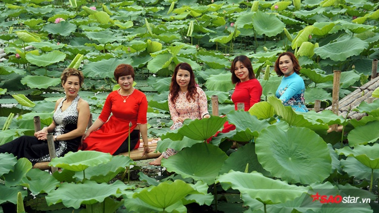 Nhiều chị em tranh thủ diện váy áo xinh đẹp đi chụp ảnh cùng hoa sen.