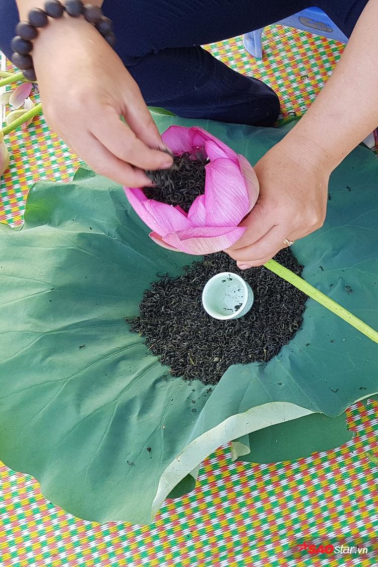 Hoa sen để ướp trà phải là hoa sen Hồ Tây, búp to, trăm cánh, có nhiều cánh nhỏ gần đài sen, có hương thơm ngát.