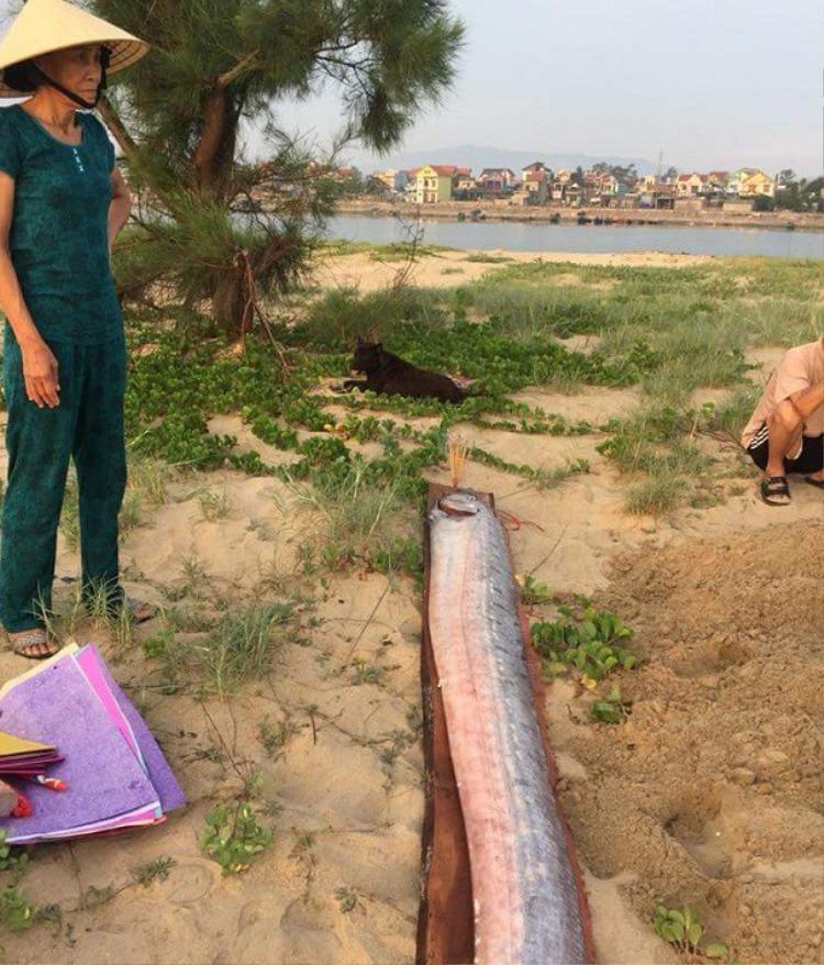 Cá hố rồng chết dạt vào bờ biển Quảng Bình được người dân phát hiện.