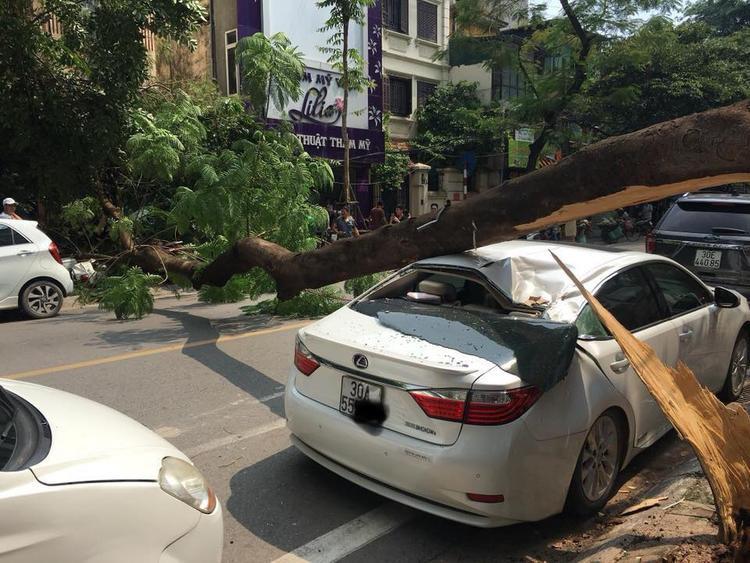 Chiếc xe bị thân cây đè lên.