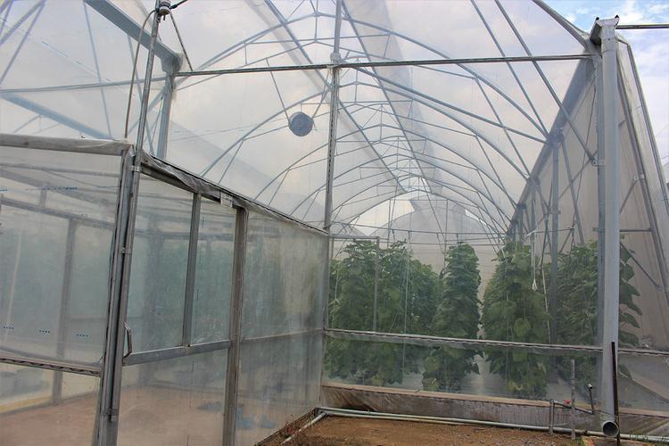 Kết cấu nhà màn dưa lưới của nông trại
