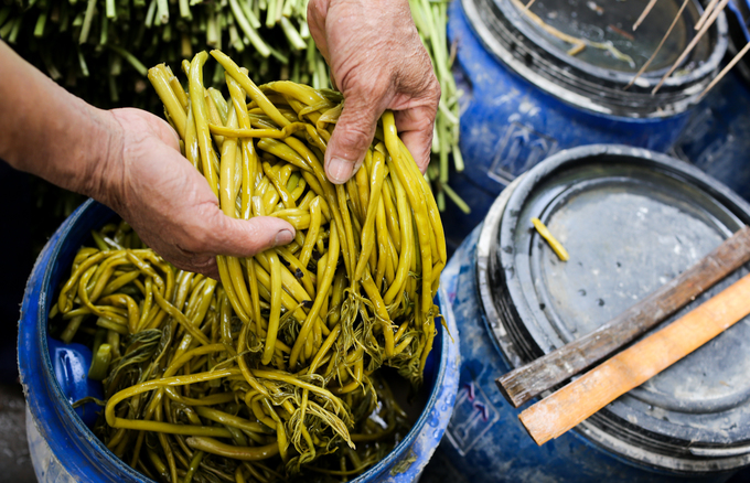 Đọt non của cây rau móp có thể được dùng để chế biến thành nhiều món như ăn sống, bóp gỏi, luộc, xào, nấu canh chua, nhúng lẩu… Nhiều hộ trồng còn muối chua số lượng lớn để bán.