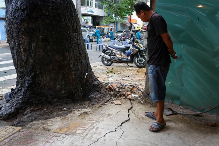 Tại đường Trần Bình Trọng (quận 5), thân cây dầu cổ thụ nghiêng ra đường, mảng gạch lát vỉa hè quanh gốc nứt toác khiến nhiều người chạy xe ngang hoảng sợ.