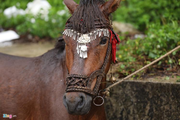 Ngựa thi đấu được trang điểm trên đầu bằng những vòng bạc trang trọng.