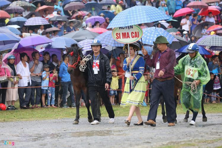 Khởi đua từ ngày 8/6, 76 nài ngựa đến từ các huyện Bắc Hà, Si Ma Cai (Lào Cai) và huyện Sín Mần (Hà Giang) đã tham gia thi đấu vòng loại để chọn ra 32 nài ngựa vào vòng trong.
