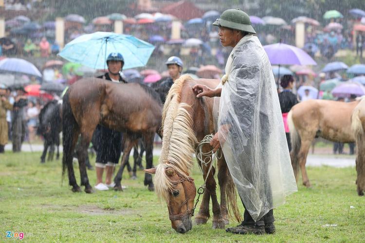 Ngày hội năm nay có chủ đề Vó ngựa cao nguyên trắng. Mỗi khi tổ chức, giải đấu thu hút rất đông sự quan tâm của người dân trong tỉnh.