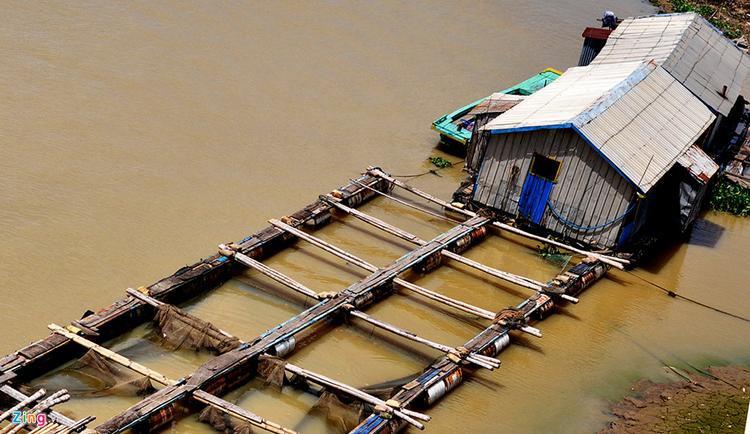 Cá chết đã đẩy hàng chục hộ dân rơi vào cảnh trắng tay. Bà Nguyễn Thị Thu nói rằng sau một đêm, gia đình bà mất hơn 20 tấn cá lăng, chép, diêu hồng… Thiệt hại hàng trăm triệu đồng.